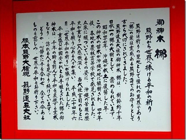 熊野速玉神社 梛(なぎ)の大樹