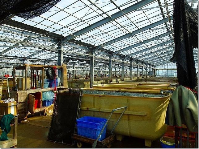 海ぶどう養殖場 久米島
