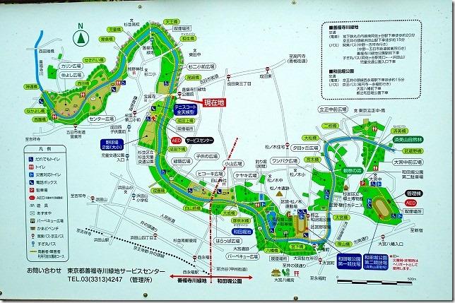 善福寺川緑地 和田堀公園