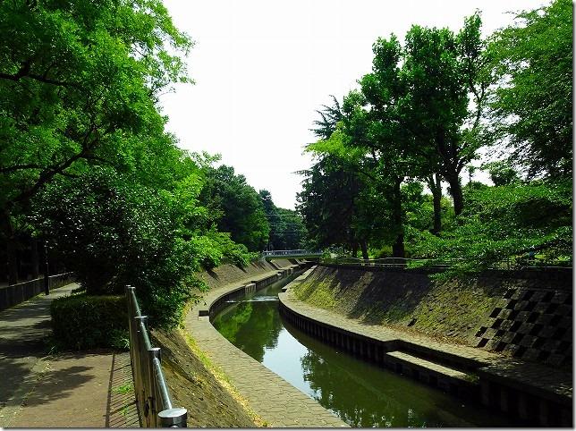 善福寺川緑地 杉並区