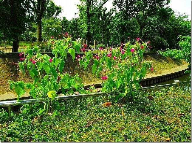 和田堀公園 善福寺川
