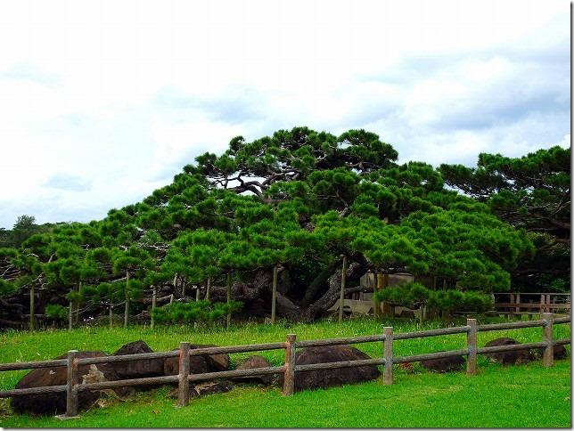 五枝(ごえだ)の松 久米島