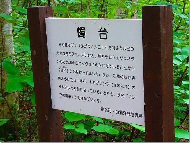 獅子ヶ鼻湿原 燭台