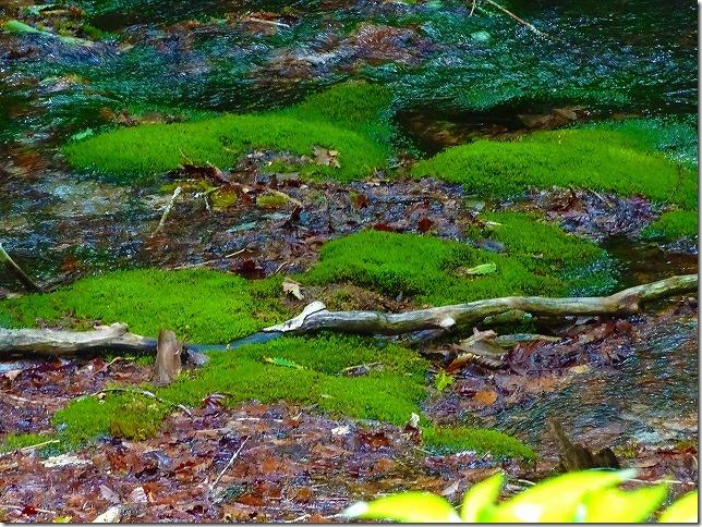 獅子ヶ鼻湿原 鳥海マリモ
