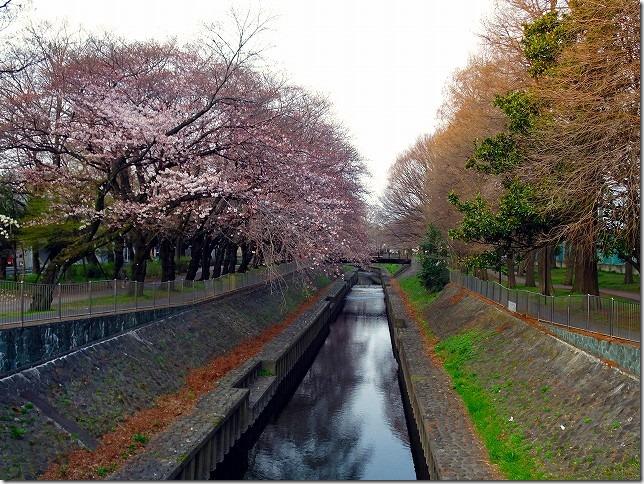 善福寺川緑地(東京都 杉並区)