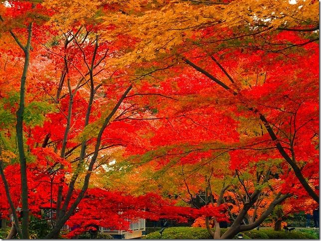 太田黒(おおたぐろ)公園 紅葉  東京都 杉並区