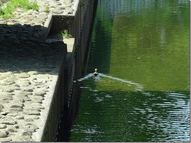 善福寺側緑地 東京都 杉並区