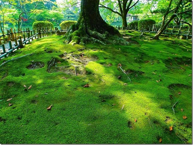 兼六園(石川県 金沢市)