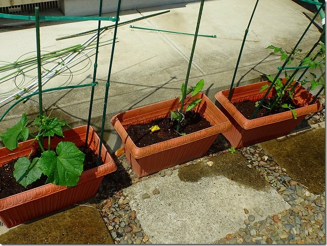 2018年 家庭菜園
