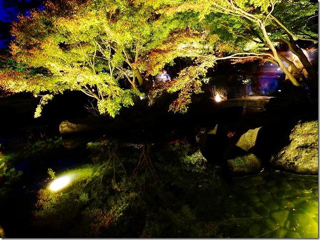 太田黒公園 2018年紅葉ライトアップ 東京都 杉並区
